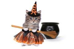 逗人喜爱的万圣夜巫婆主题的小猫 免版税图库摄影