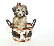 逗人喜爱的万圣节小狗 免版税库存图片
