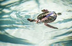 逗人喜爱的乌龟 免版税库存照片