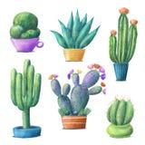 逗人喜爱的五颜六色的仙人掌集合,在罐的室内植物 库存照片