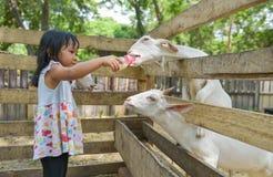 逗人喜爱的亚裔女孩人工喂养山羊 免版税库存图片