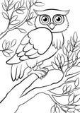 逗人喜爱的亲切的猫头鹰坐树在森林里 免版税库存照片