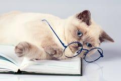 逗人喜爱的企业猫佩带的玻璃 免版税库存图片