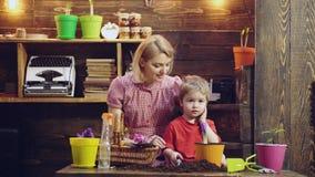 逗人喜爱的儿童男孩帮助他的母亲喜欢植物 小花匠帮助妈妈种植在罐的花 背景概念花春天空白黄色年轻人 股票视频