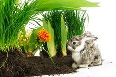 逗人喜爱的兔子、宠物在土壤与橙色花和绿色植物 免版税库存图片