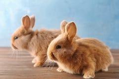 逗人喜爱的兔子二 免版税库存图片