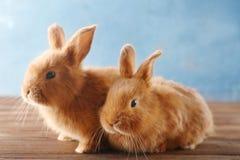 逗人喜爱的兔子二 库存图片