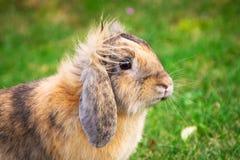 逗人喜爱的兔子纵向 免版税库存图片