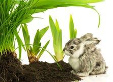 逗人喜爱的兔子,在土壤的宠物与绿色植物 免版税图库摄影