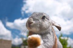 逗人喜爱的兔子 免版税库存图片