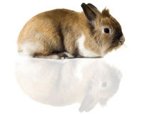 逗人喜爱的兔宝宝一点 免版税库存照片
