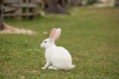 逗人喜爱的兔宝宝在庭院里 免版税库存照片