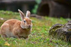逗人喜爱的兔宝宝的画象在维也纳动物园里 免版税库存照片