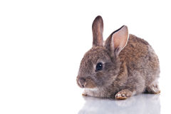 逗人喜爱的兔宝宝