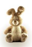 逗人喜爱的兔宝宝 免版税库存照片