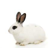 逗人喜爱的兔宝宝 免版税库存图片
