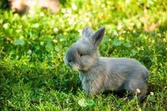逗人喜爱的兔宝宝 库存照片