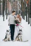 逗人喜爱的加上两西伯利亚爱斯基摩人在多雪的森林冬天婚礼背景被摆在  附庸风雅 库存图片