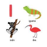 逗人喜爱的动物动物园字母表 在鬣鳞蜥的,朱鹭, indri I上写字 免版税库存图片