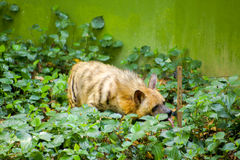 逗人喜爱的动物饮用水 免版税库存图片