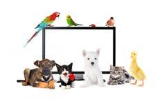逗人喜爱的动物临近LCD显示器 库存图片