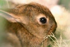 逗人喜爱的动物 免版税库存照片