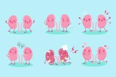 逗人喜爱的动画片肾脏 库存图片