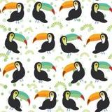 逗人喜爱的动画片toucan鸟在白色背景,无缝的样式设置了 向量 免版税库存照片
