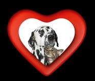 逗人喜爱的华伦泰猫和狗在黑色隔绝的红色心脏 免版税库存照片