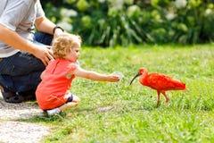 逗人喜爱的可爱的喂养红色朱鹭鸟的小孩女孩和父亲在公园 愉快的石南丛生的获得孩子和的人与给的乐趣 免版税库存图片