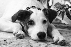 逗人喜爱的哀伤的小狗 免版税库存图片