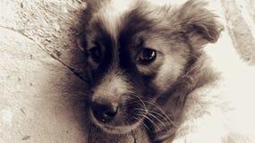 逗人喜爱的哀伤的小狗 免版税图库摄影