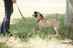 逗人喜爱的哈巴狗狗和所有者在公园 免版税库存图片
