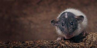 逗人喜爱的啮齿目动物坐树干和神色对照相机 免版税库存图片