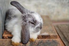 逗人喜爱的困兔子 图库摄影