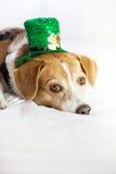 逗人喜爱的圣帕特里克的日乐趣的狗佩带的帽子 库存照片
