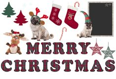 逗人喜爱的圣诞节元素和对象与哈巴狗狗 免版税库存图片