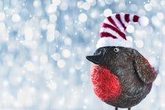 逗人喜爱的圣诞节鸟在冬天妙境 抽象空白背景圣诞节黑暗的装饰设计模式红色的星形 库存图片