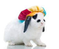 逗人喜爱的复活节帽子兔子 免版税库存图片