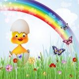 逗人喜爱的复活节鸡 库存图片