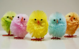 逗人喜爱的复活节小鸡 库存图片
