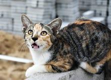 逗人喜爱的多彩多姿的猫单独坐 库存照片