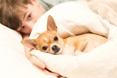 逗人喜爱的奇瓦瓦狗和年轻男孩 图库摄影