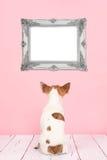 逗人喜爱的奇瓦瓦狗狗被看见在后面看一个空的巴洛克式的画框 库存图片