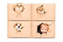 逗人喜爱的女孩和滑稽的宠物神色在一个被撕毁的孔外面在箱子 免版税库存照片
