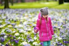 逗人喜爱的女孩采摘番红花在早期的春天的美丽的开花的番红花草甸开花 免版税图库摄影