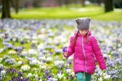 逗人喜爱的女孩采摘番红花在早期的春天的美丽的开花的番红花草甸开花 库存照片