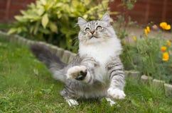 逗人喜爱的嬉戏的小猫 免版税图库摄影