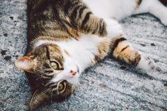 逗人喜爱的嬉戏的猫 免版税库存图片