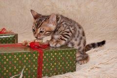逗人喜爱的孟加拉小猫在有欢乐礼物的一条软的床罩使用 一个月大 库存照片